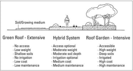 How To Start An Affordable Rooftop Garden